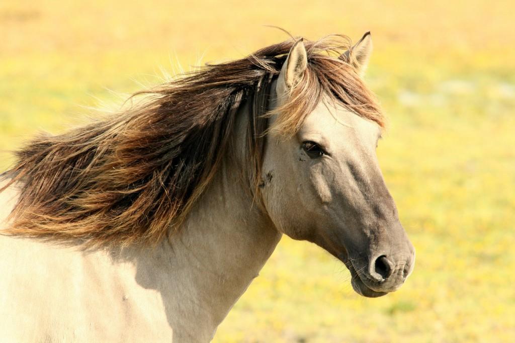 Конный спорт в Туоксе